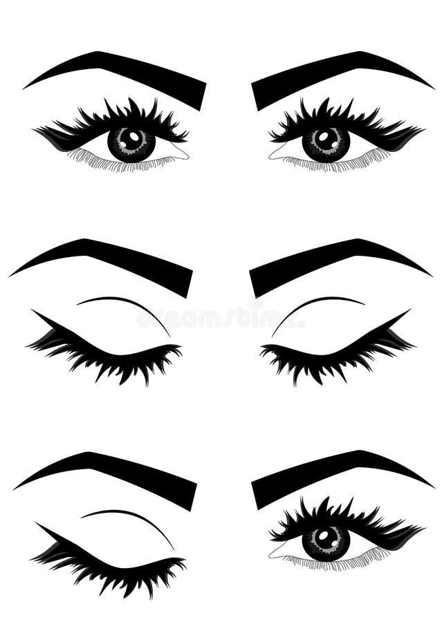 Webillustratie van het sexy luxueuze oog van de vrouw met wenkbrauwen en volledige zwepen typografie royalty-vrije illustratie