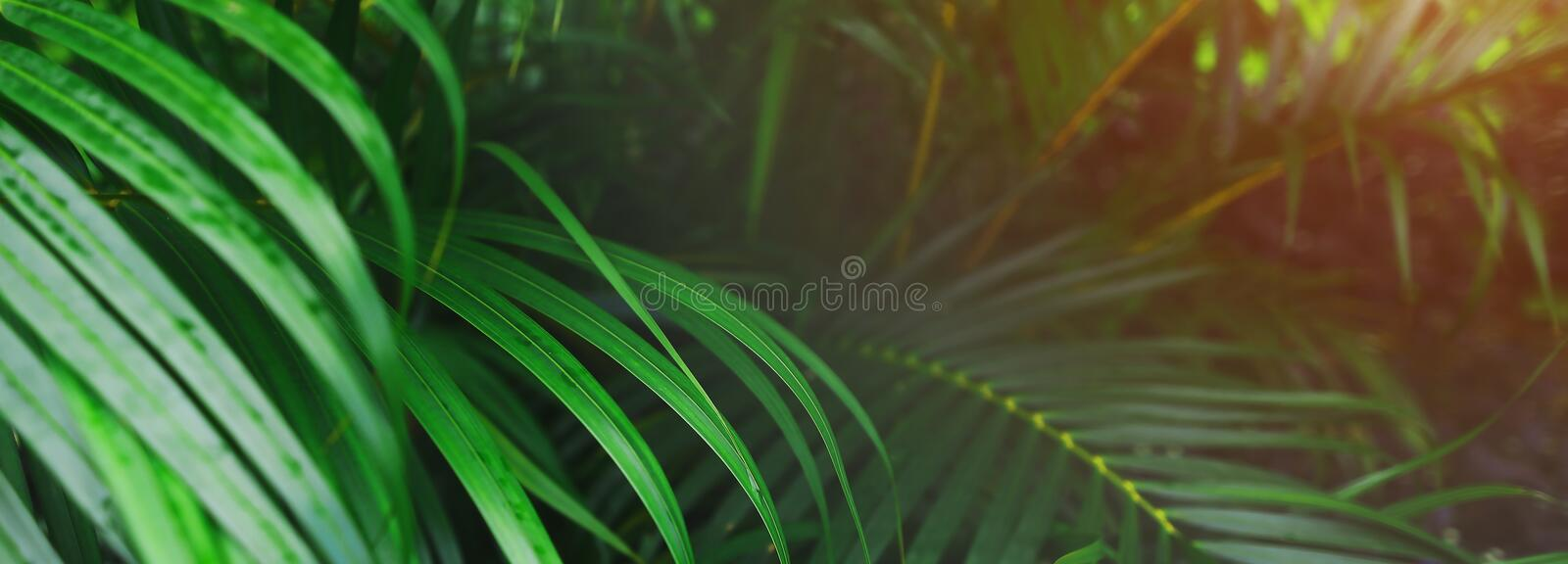 Website header and banner of tropical palm leaves and sunshine. stock images