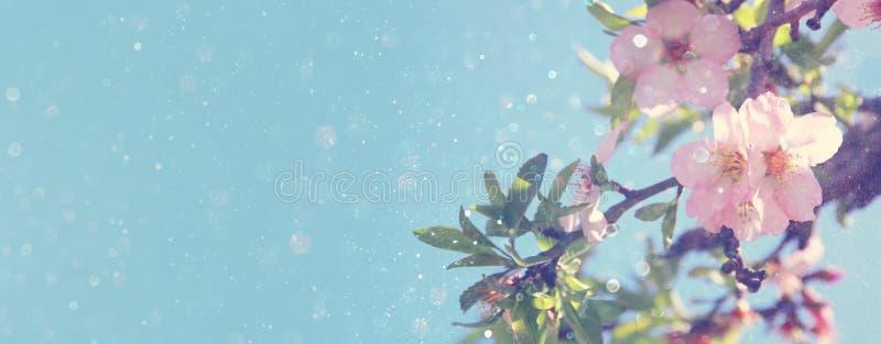 websitebanerbakgrund av av trädet för körsbärsröda blomningar för vår det vita Selektivt fokusera royaltyfria foton