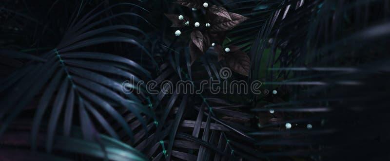 Websitebanret av tropiskt gömma i handflatan lövverk för bakgrund i mörka mjuka färger royaltyfri bild