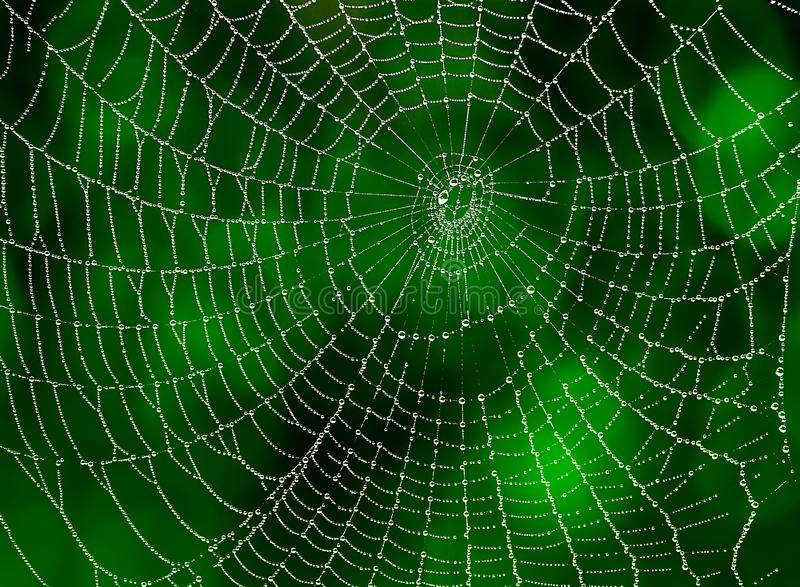 Webspin met waterdalingen stock afbeelding