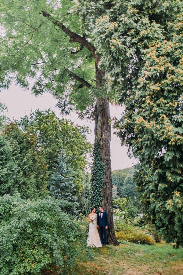 Wedded onlangs paar onder hoge acacia-boom creeped met klimop Enkel het gehuwde lopen in park in dag van hun huwelijk royalty-vrije stock fotografie