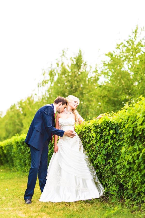 Wedding, красивый романтичный жених и невеста целуя и обнимать стоковое фото