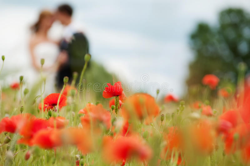 Wedding. Couple in the poppies field. Focus to the poppy stock photo