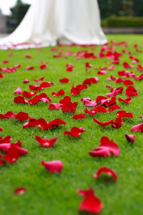Wedding. Petals of rose spilled on grass for a wedding