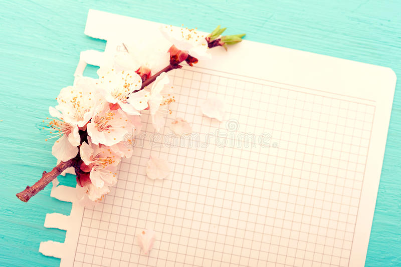 Wedding background. Flowering branch of cherry and royalty free stock images