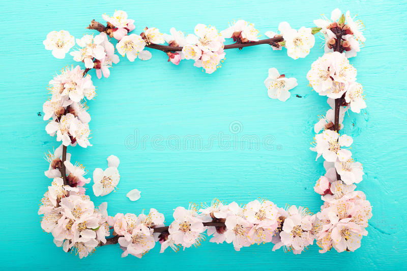 Wedding background. Flowering branch of cherry stock photo