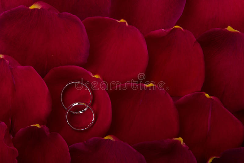 Wedding bands on rose petals stock image