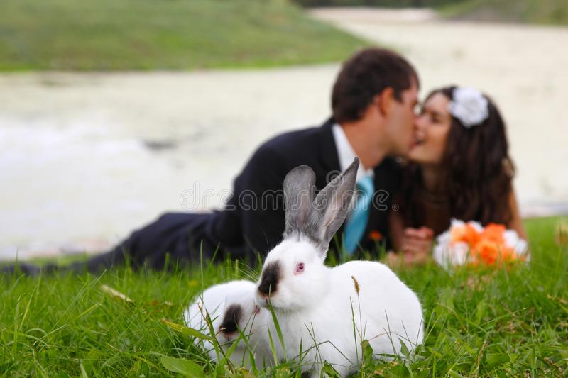 Wedding, beautiful young bride kiss groom in love with two rabbi. Ts in the foreground, park summer outdoor stock photography