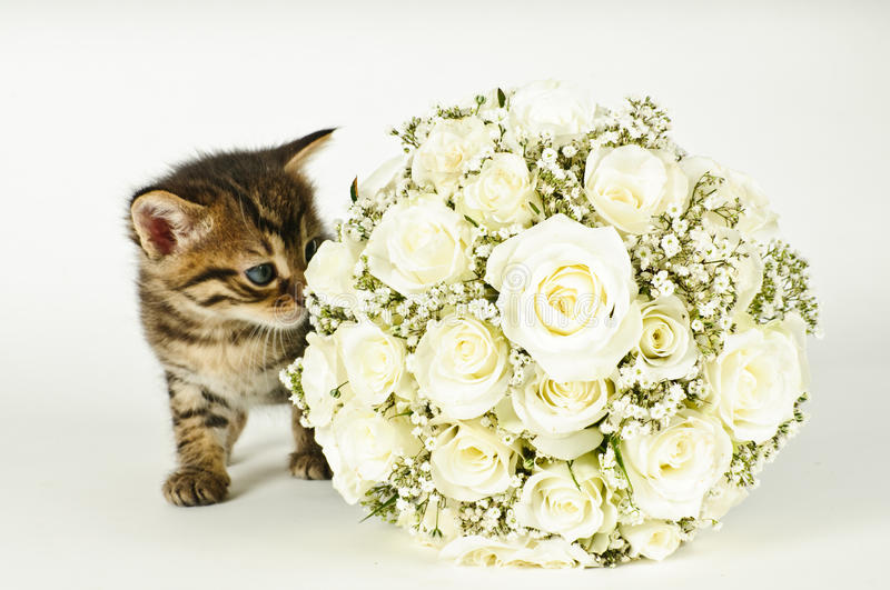 Wedding Bouquet and a cute cat.