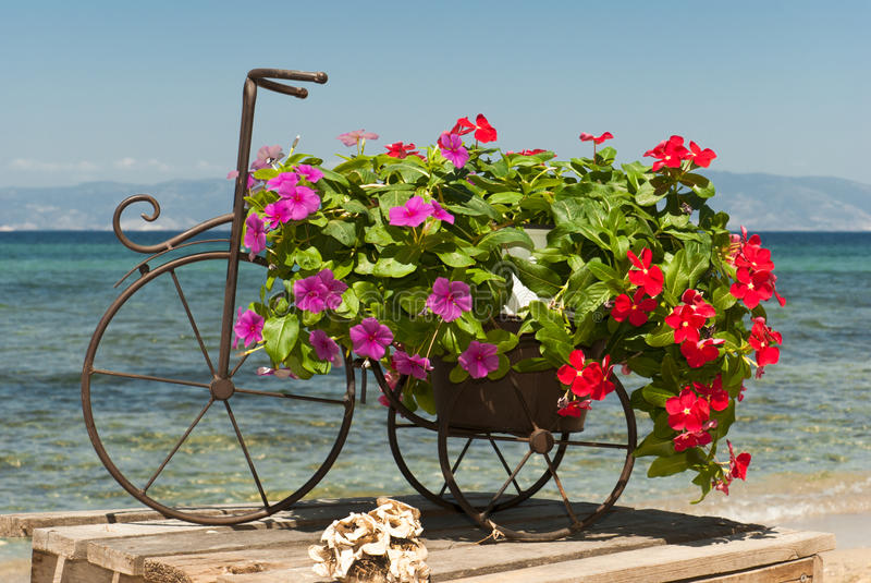 Download Wedding bouquet of roses stock photo. Image of band, feminine - 26537024