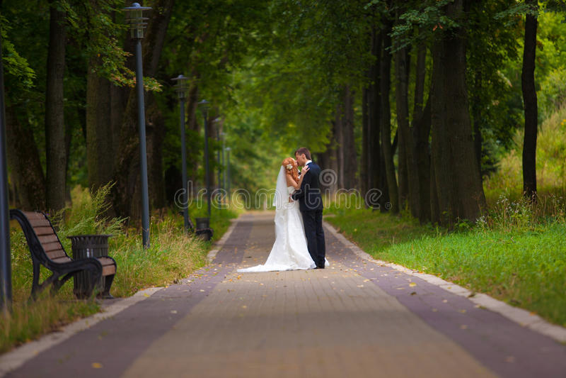 Wedding, bride and groom, love royalty free stock image