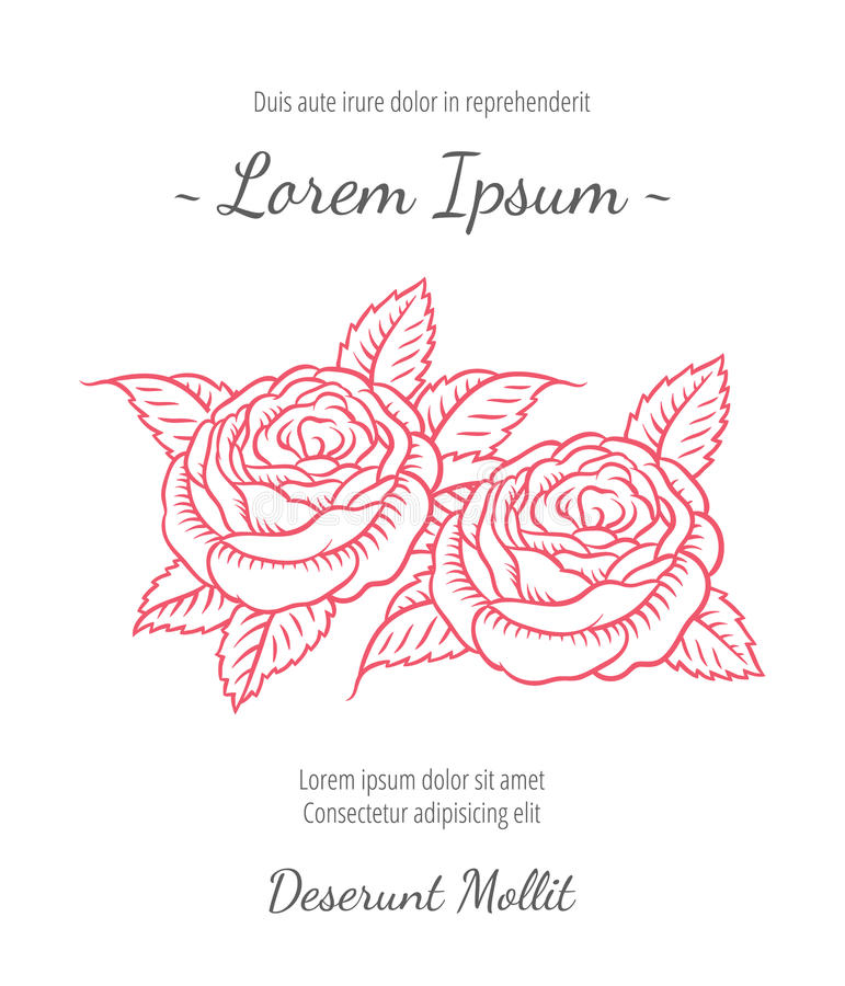 Wedding card with drawing roses in retro style. Wedding card with drawing roses in a classic retro style - vector flower design template royalty free illustration