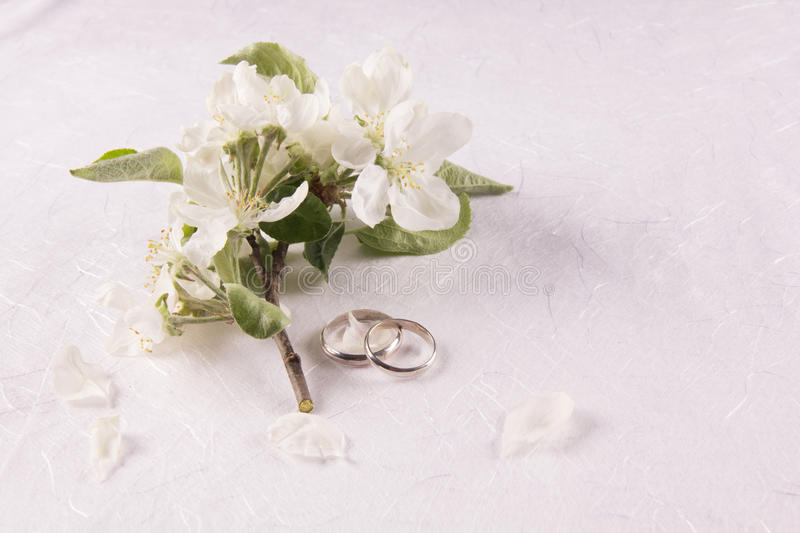 Wedding concept with apple-tree flowers royalty free stock photos