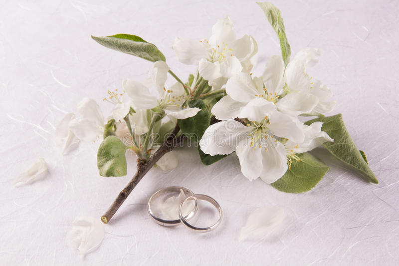 Wedding concept with apple-tree flowers royalty free stock photography