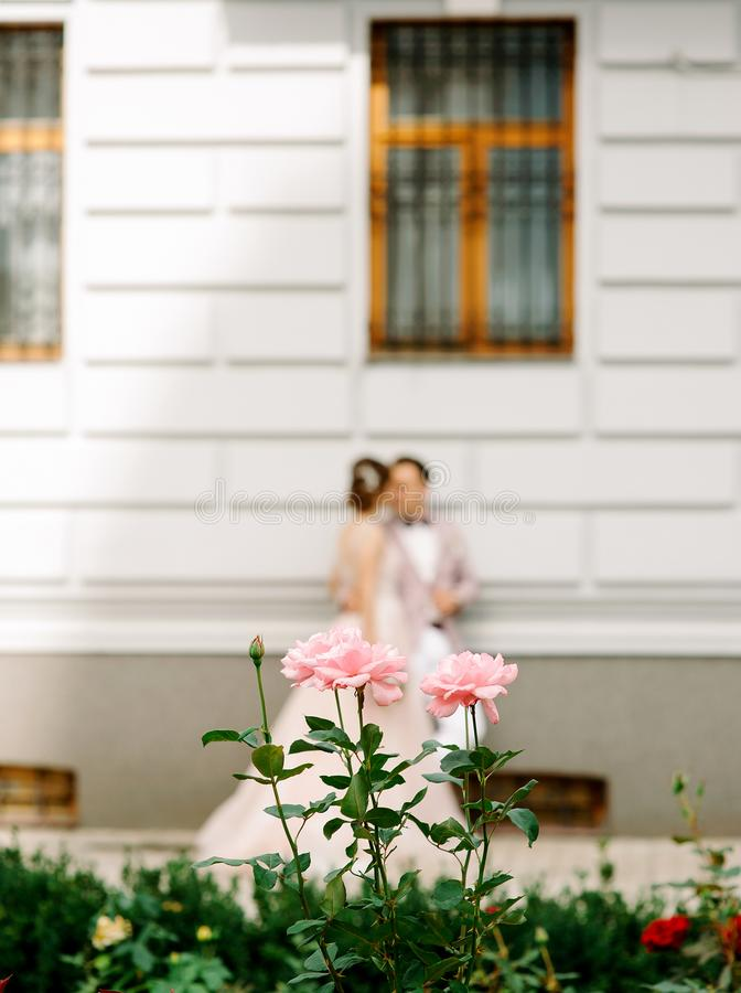 Wedding concept. Bride and groom kissing near building, roses on foreground royalty free stock photo