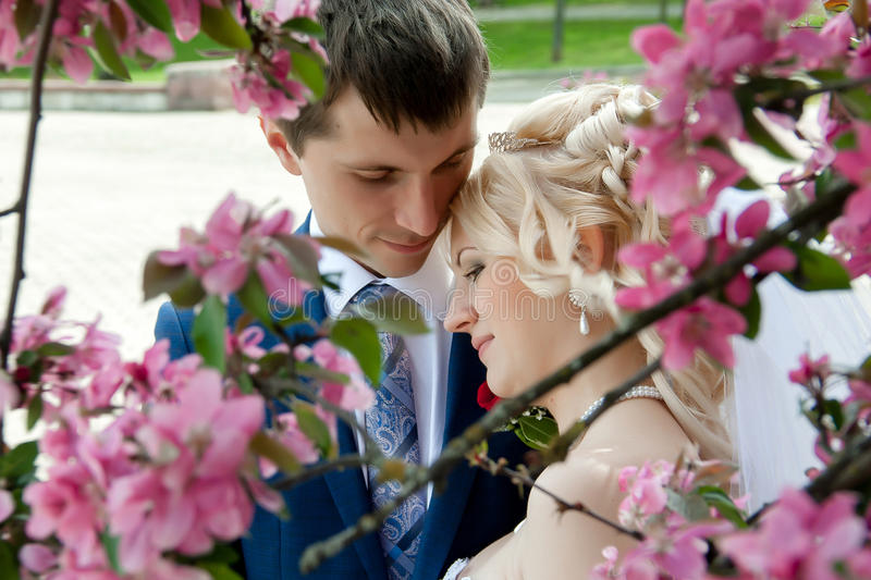 Wedding couple in branches of blooming tree royalty free stock photography