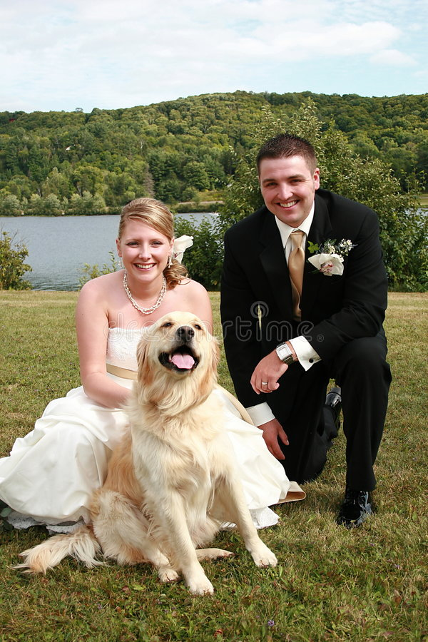 Wedding couple and pet royalty free stock image