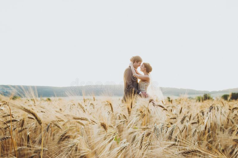 Wedding couple in wheat field in sunlight. Romantic feelings at sunset. Couple in love royalty free stock images