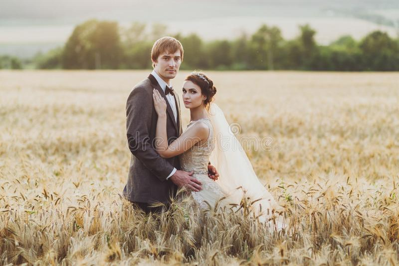 Wedding couple in wheat field in sunlight. Romantic feelings at sunset. Couple in love stock photography