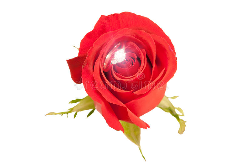 Wedding diamond ring sparking inside blossom beautiful red rose, Valentine's theme. Close up the wedding diamond ring sparking inside the blossom royalty free stock photo