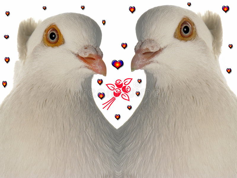Download Wedding dove stock image. Image of pair, dove, nature - 4424421