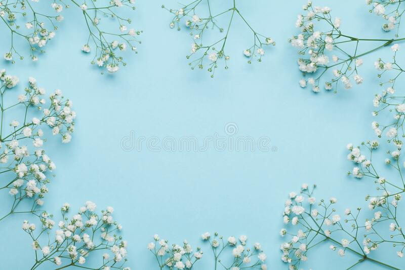 Wedding flower frame on blue background from above. Beautiful floral pattern. Flat lay style. royalty free stock photography