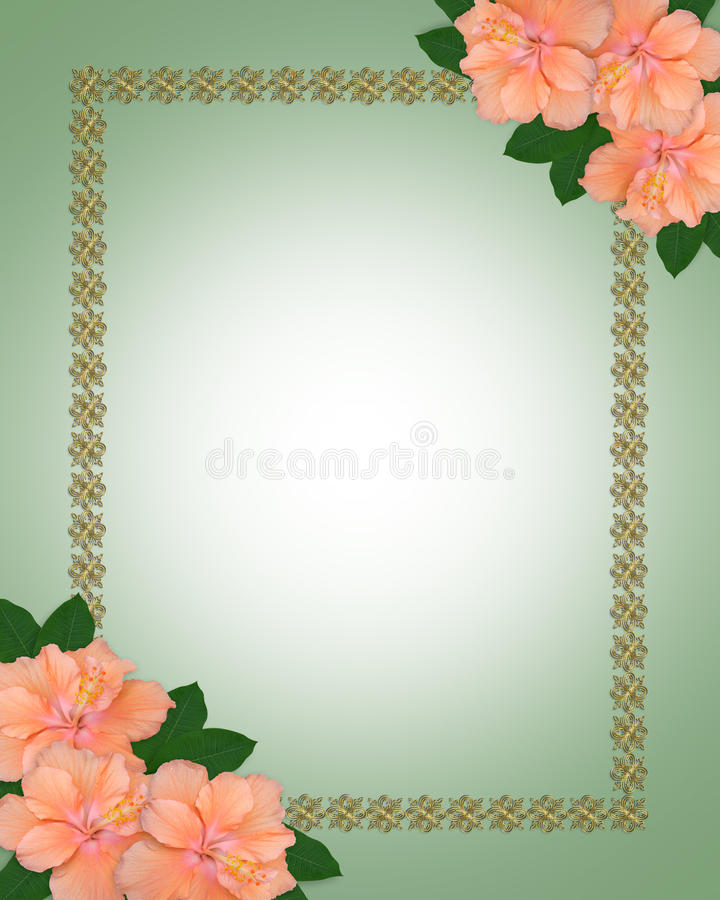 Wedding invitation border Hibiscus. Image and illustration composition of beautiful peach color hibiscus flowers, ornamental gold border for wedding, party vector illustration