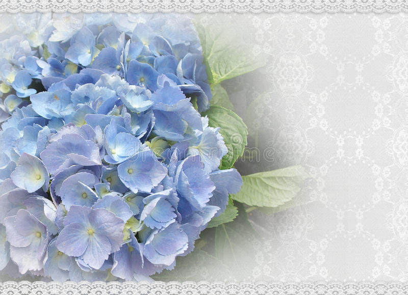 Download Wedding Invitation Hydrangea And Lace Royalty Free Stock Images - Image: 19222169