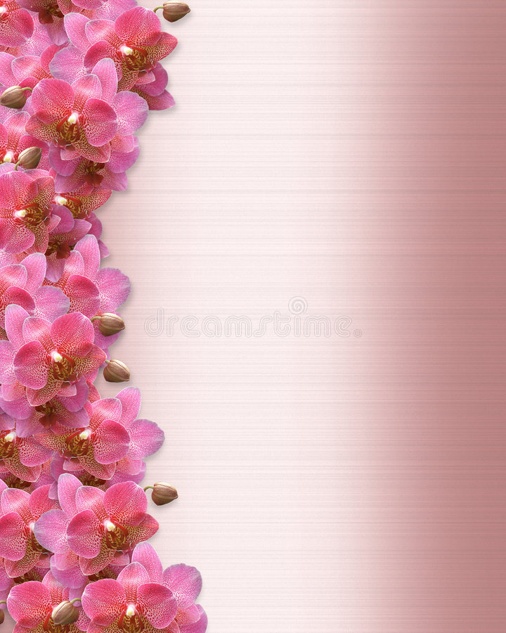 Wedding Invitation Orchids Border royalty free stock photo