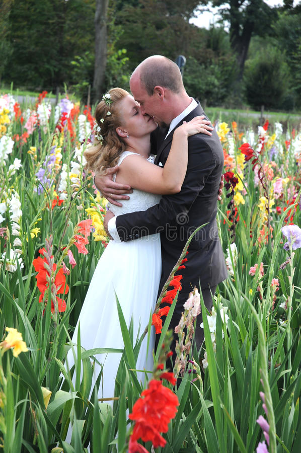 Wedding kiss. Groom gives a tender kiss to his wife in the middle of a field with gladiolus flowers stock photos