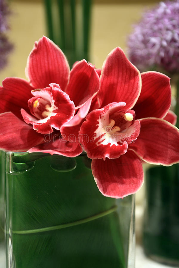 Wedding party. Red orchid set on wedding table for welcome stock images