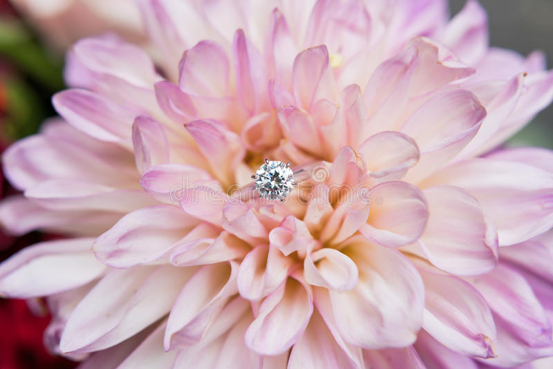 Wedding ring. Isolated on a flower royalty free stock photos