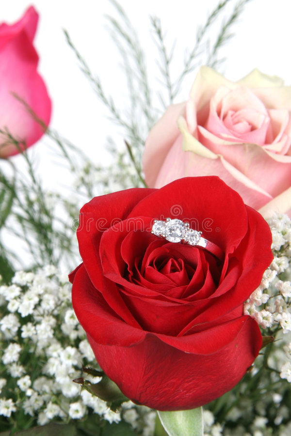 Wedding Ring In Red Rose Stock Photo