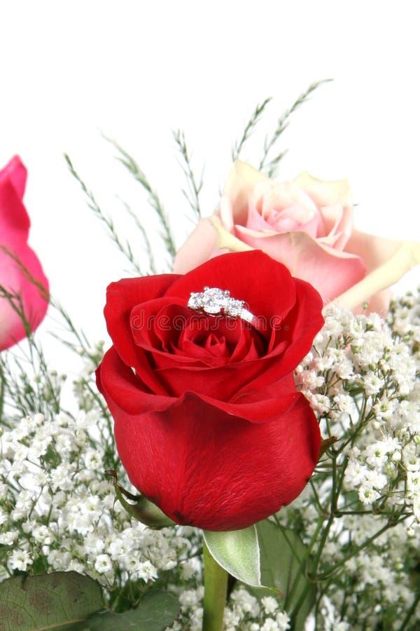 Download Wedding ring in rose stock photo. Image of detail, bloom - 2547638