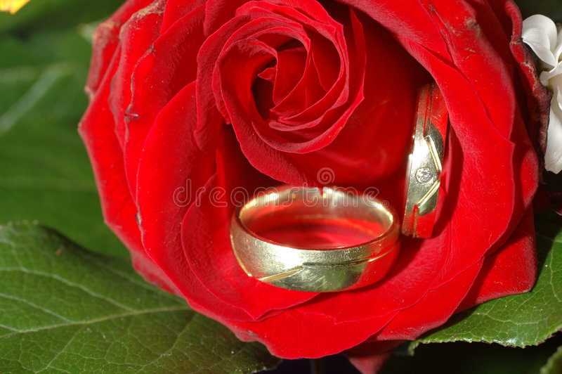 Download Wedding rings stock photo. Image of ring, blooming, leaves - 100772