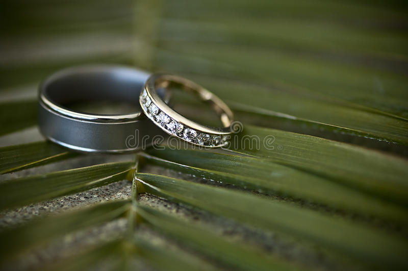 Download Wedding rings stock image. Image of palm, silver, wedding - 13568109