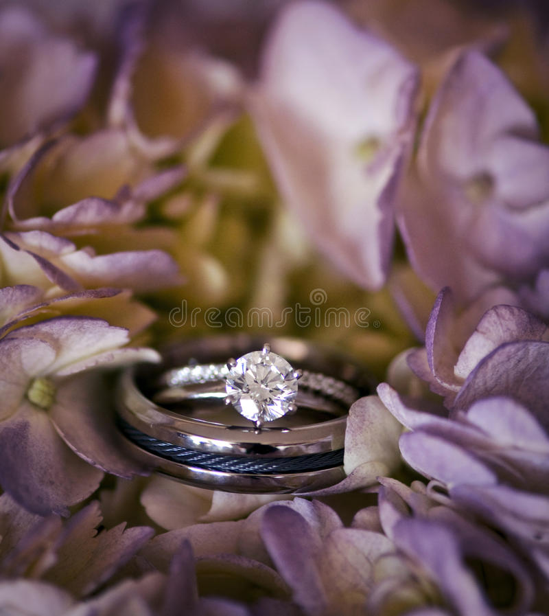 Wedding rings. His and hers wedding rings in bouquet of lavender hydrangea flowers stock photo