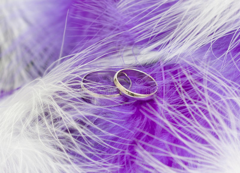 Download Wedding Rings stock photo. Image of bridal, love, platinum - 18929576