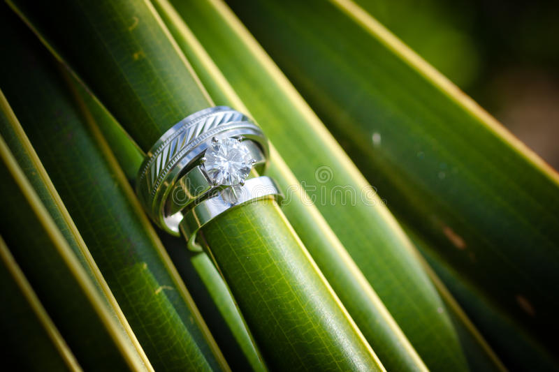 Download Wedding Rings stock image. Image of bridal, high, family - 27857171