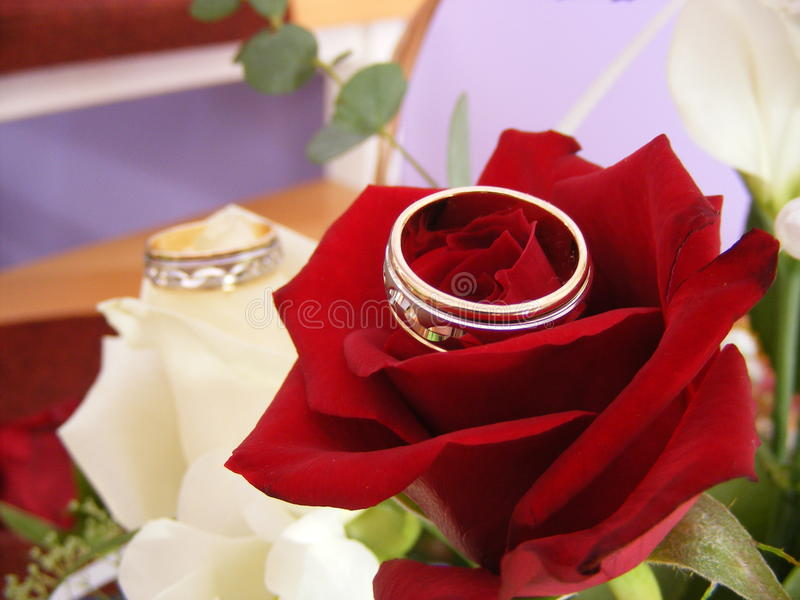 Download Wedding rings stock photo. Image of gift, delicate, marry - 28616128
