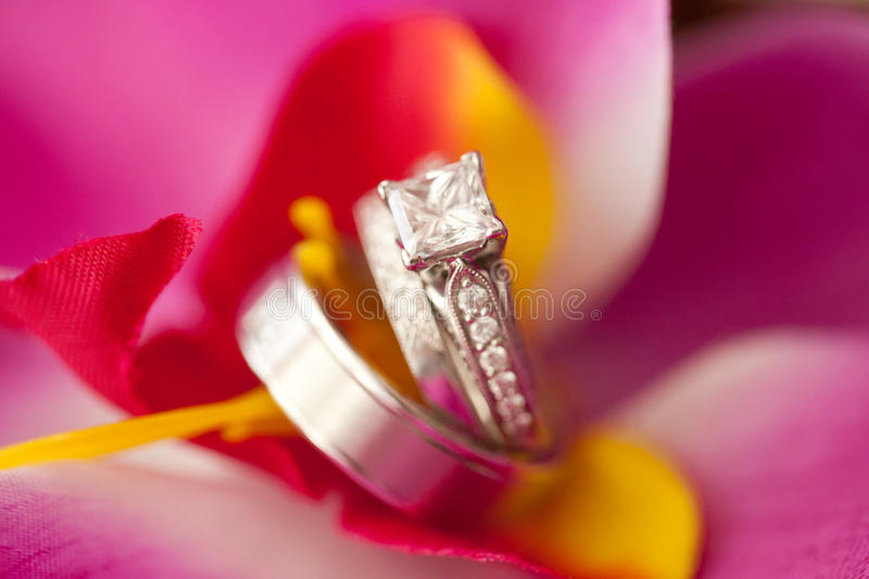 Download Wedding Rings stock photo. Image of fashion, bands, black - 28888526