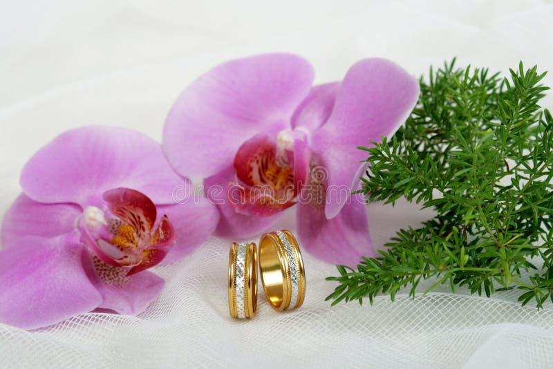 Download Wedding rings stock image. Image of married, bride, seasonal - 3384085