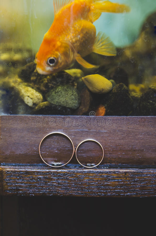 Wedding rings. Wedding rings ang gold fish stock photography