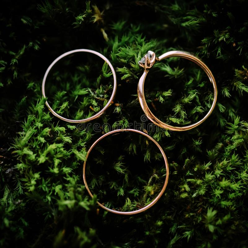 Wedding rings arranged on the green natural moss. royalty free stock image