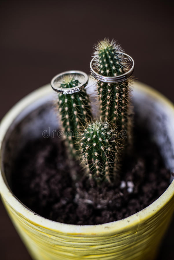 Wedding rings on the cactus stock photos