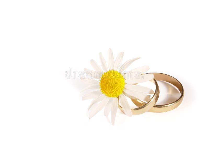 Wedding rings and daisy stock photos