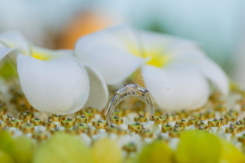 Wedding rings. On flowes setting stock images