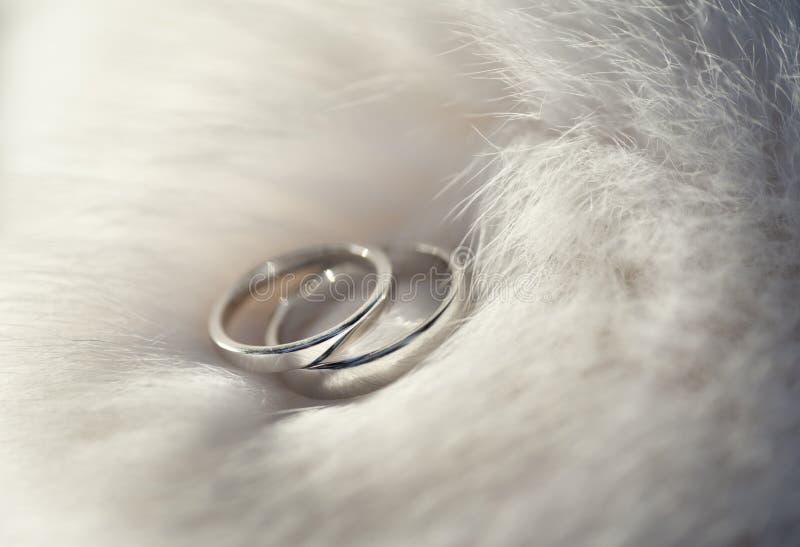 Wedding rings on fur boa.