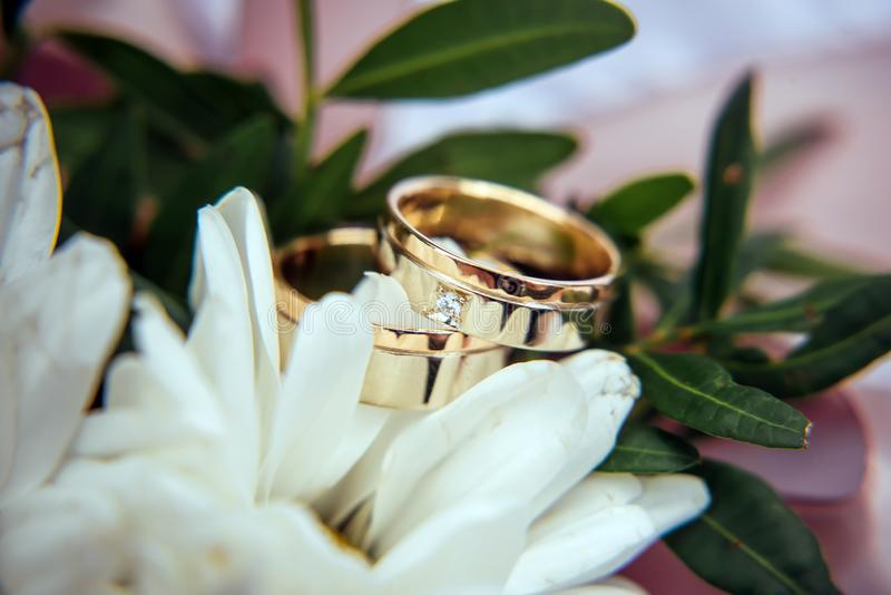 Wedding rings, gold and diamond on a white chrysanthemum, close-up. Two rings among the white petals, selective focus royalty free stock photography